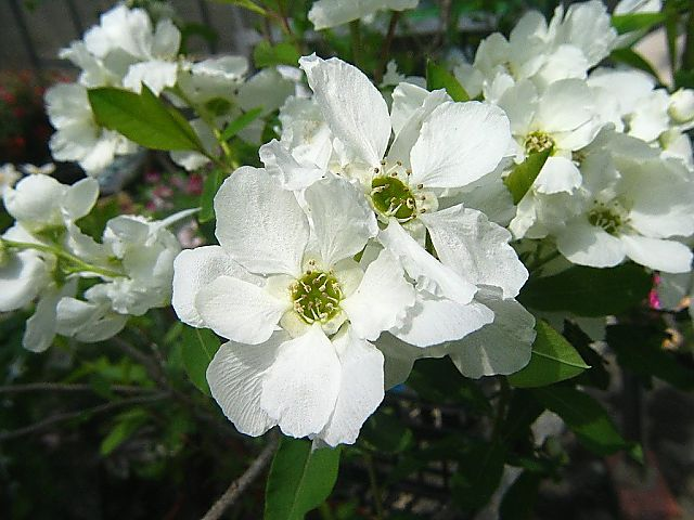 の 別名 梅 花 の